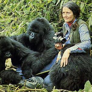 documental dian fossey gorilas