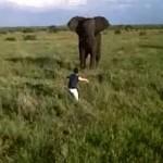Un borracho ataca a un elefante
