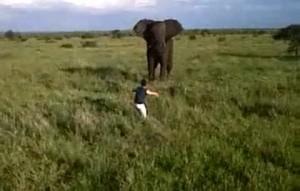 borracho y elefante