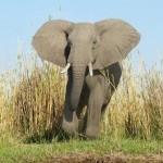 Dos elefantes enfadados asustan a unos turistas