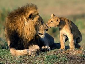 leon cachorro