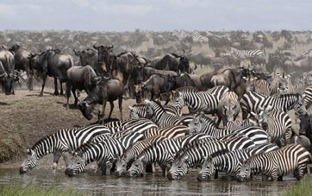 La gran migración africana