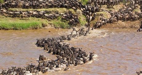 la gran migracion ñus rio mara