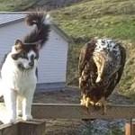 El Sr Águila visita al gato Gizmo en Alaska