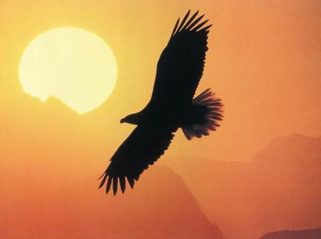 Así es volar como un águila (2)