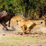 La batalla de Idube