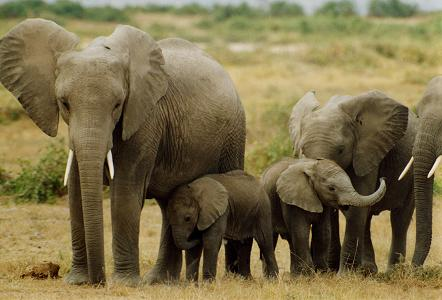 documental animales elefantes