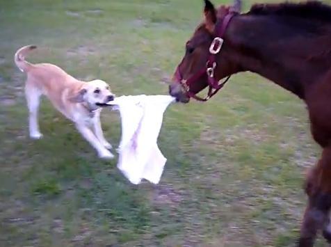 Un perro y un caballo jugando