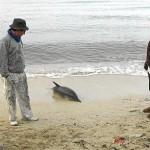 Rescate de un delfín en Mallorca