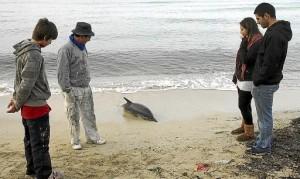 rescate delfin