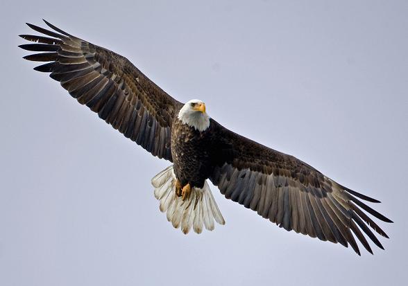 Así es volar como un águila (3)