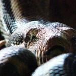 Documental de RT: El mundo de las serpientes