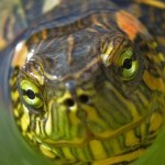 Documental de animales: Curiosidades salvajes