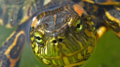 documental de animales tortuga