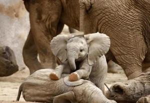 elefantes bebe jugando