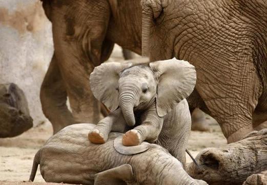Elefantes bebe jugando en la reserva de Pilanesberg