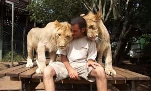 leones buenos dias