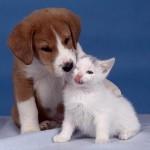 Perro salva 4 gatitos en un incendio
