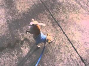 perro meando a dos patas