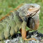 Documental de animales: Los reptiles, sobreviviendo en la naturaleza