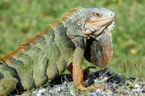 documental animales reptiles