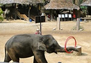 elefante jugando hula hoop