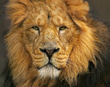 leon cara