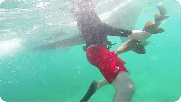 Un pequeño tiburón ataca a un buzo
