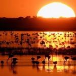 El Hombre y la Tierra – El Parque Nacional de Doñana