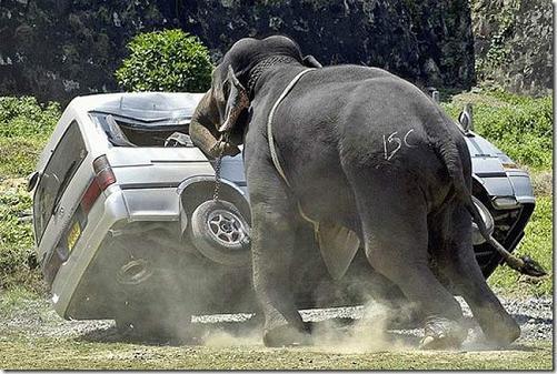 Elefante hace rodar un coche