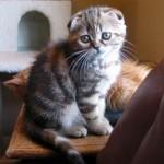 Gato pide caricias por favor