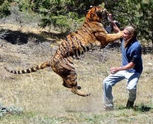 tigre atacando a randy miller