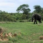 Reserva Natural Sabi Sabi