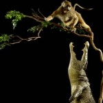 Cocodrilo cazando un babuino