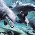Los delfines también se colocan