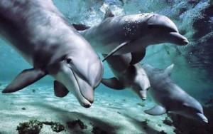 delfines colocados high