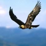 Documental: Los Alpes: El Reino del Águila Real (EP1)