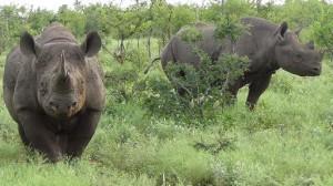 encuentro rinoceronte