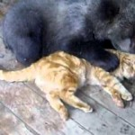 Gato y oso cachorro jugando