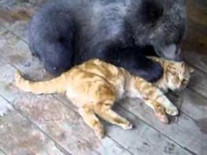 gato oso jugando