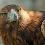 Documental: Los Alpes: El Reino del Águila Real (EP3)