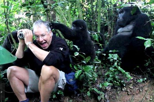 Familia de gorilas juegan con un hombre