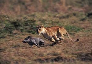 leona jabali