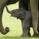 ¿Bebé elefante volviendo a la vida?