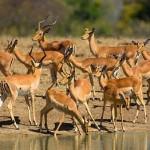 Vida salvaje en el Kruger