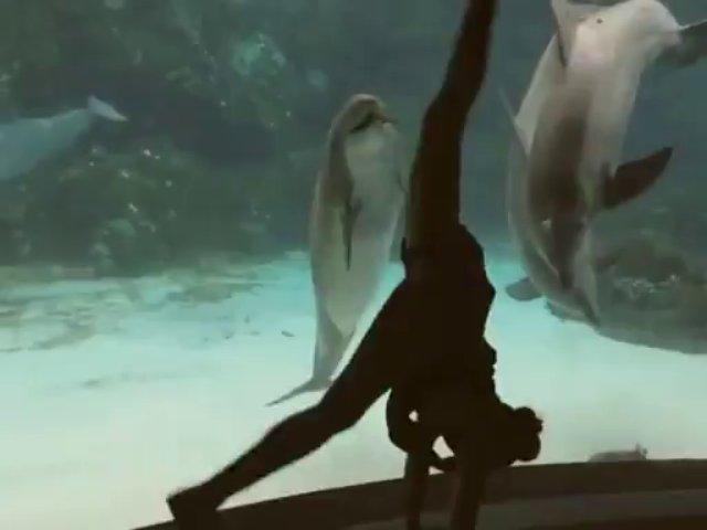 chica bailando delfin