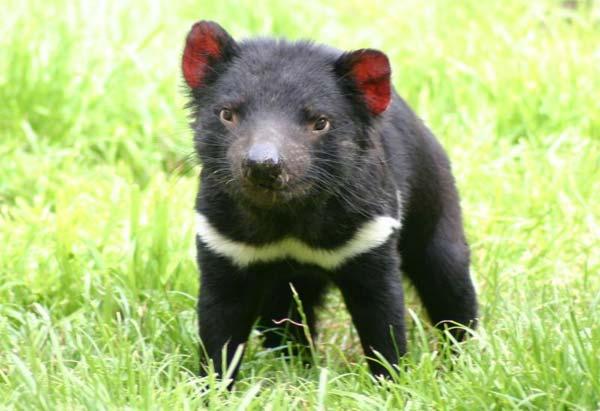 Documental de Animales: Australia salvaje