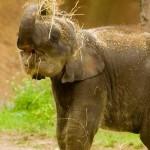Grandes documentales: La historia del elefante de pascua
