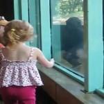 Niña y Bebe gorila Jugando