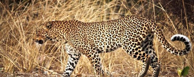 parque nacional karoo guepardo